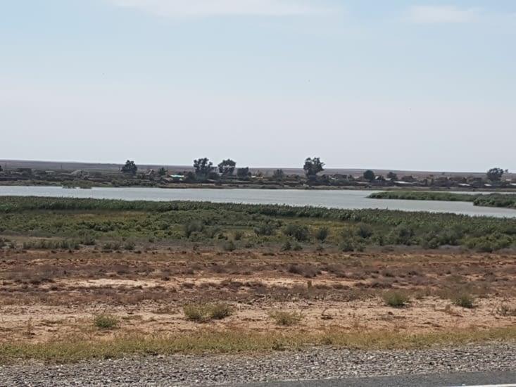 Un oasis dans le desert