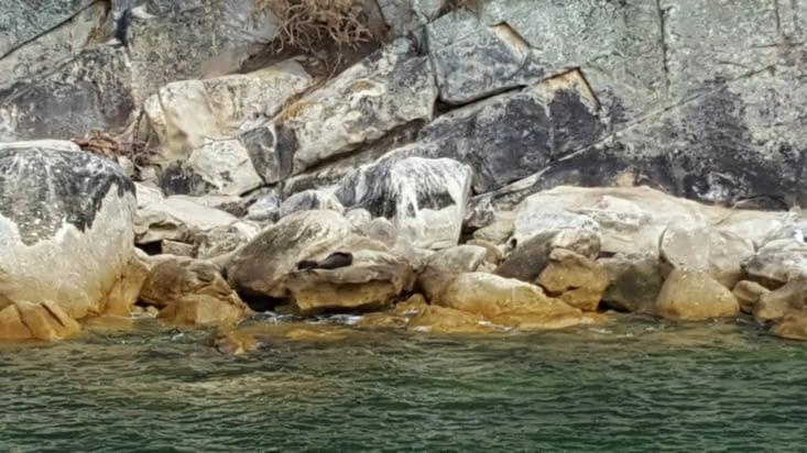 Sur le trajet du retour, on peut compter des bébés phoques monter et descendre les rochers