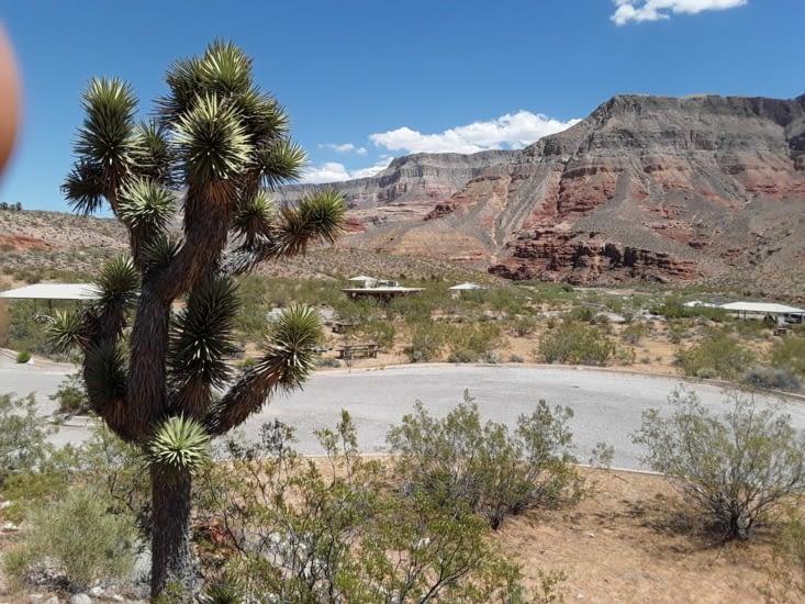 Et maintenant la flore du virgin river canyon
