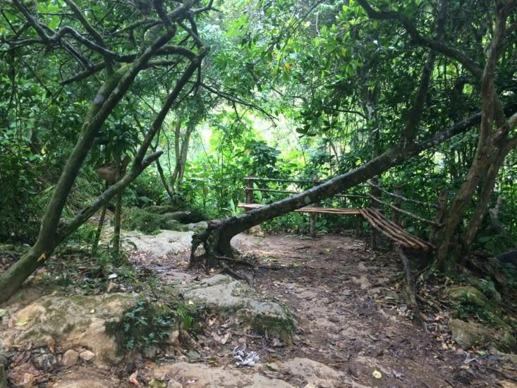 Un arbre handicapé