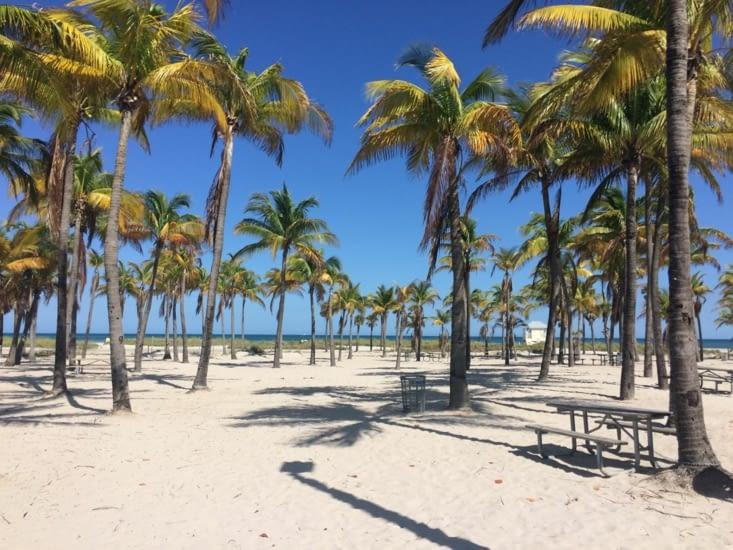 Des palmiers en veux-tu en voilà !