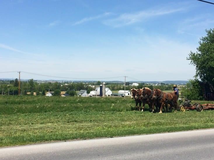 Amish fauchant de l'herbe