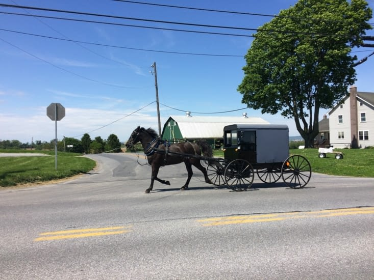 Buggy Amish