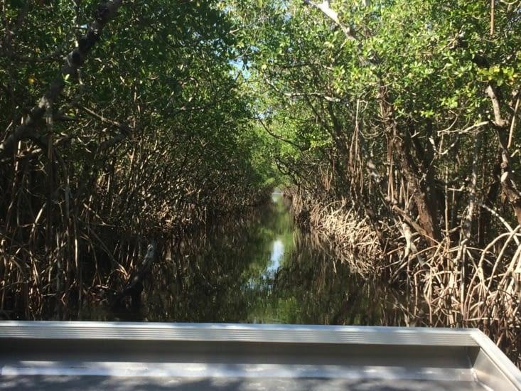 La mangrove des Everglades