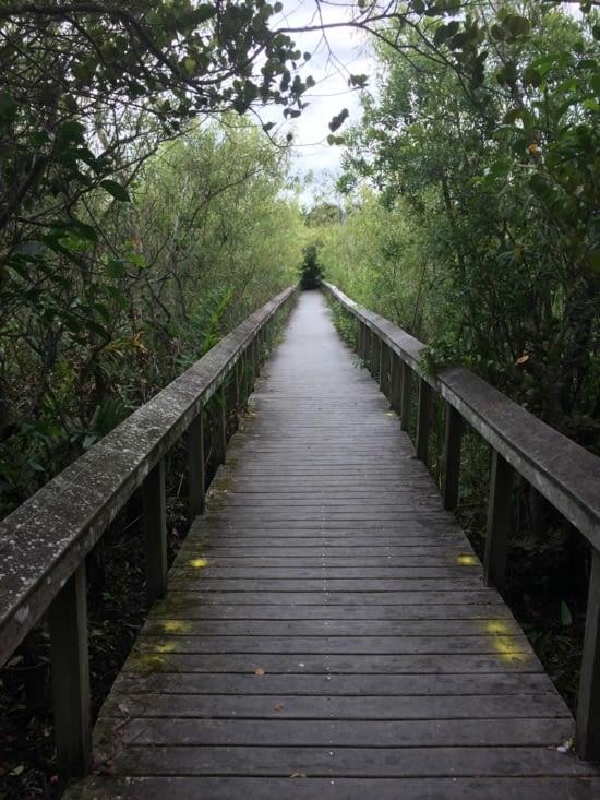 L'un des chemins de promenade de la Shark Valley
