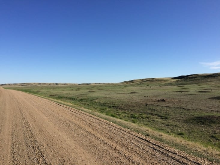Chiens de prairie