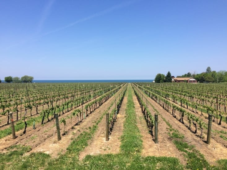 Vignoble de la région de Niagara-on-the-Lake