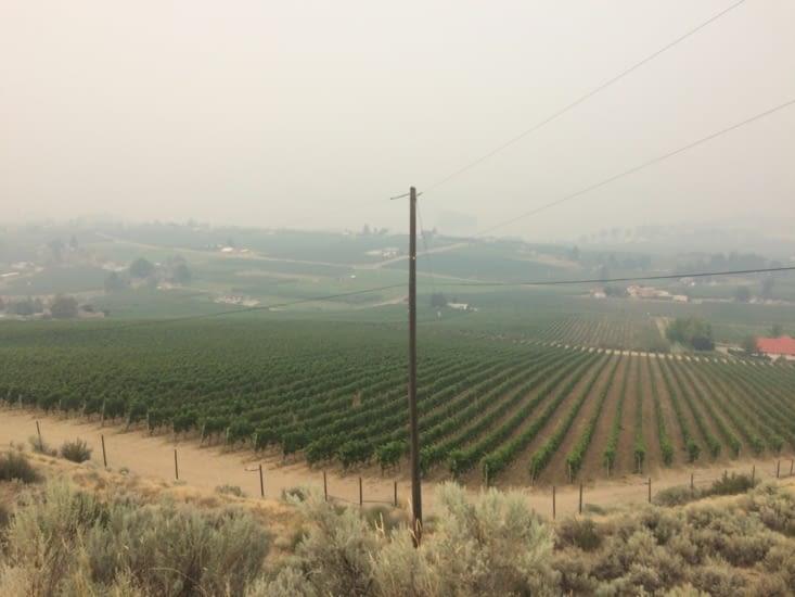Les vignobles de l'Okanagan