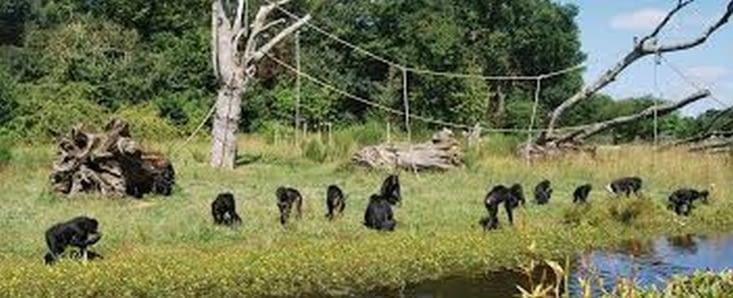 Parc des bonobos prés de Kinshasa