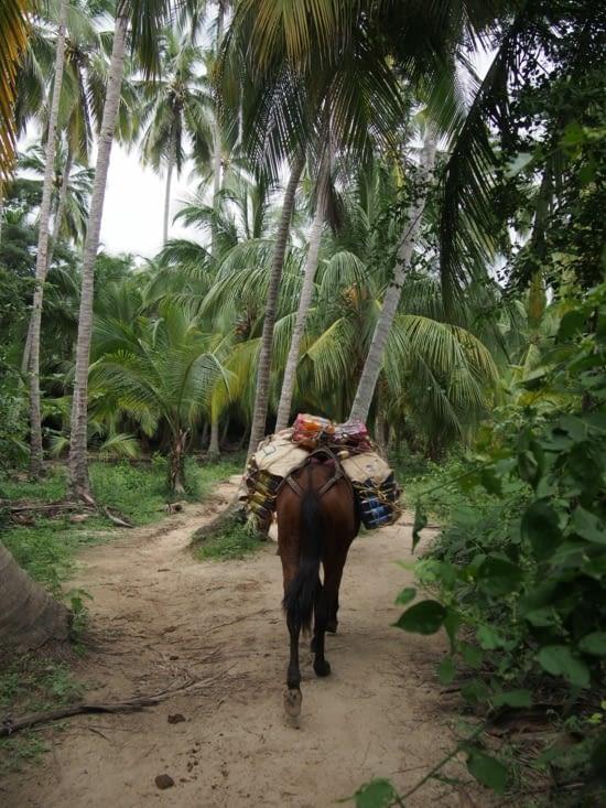 Ravitallement par cheval