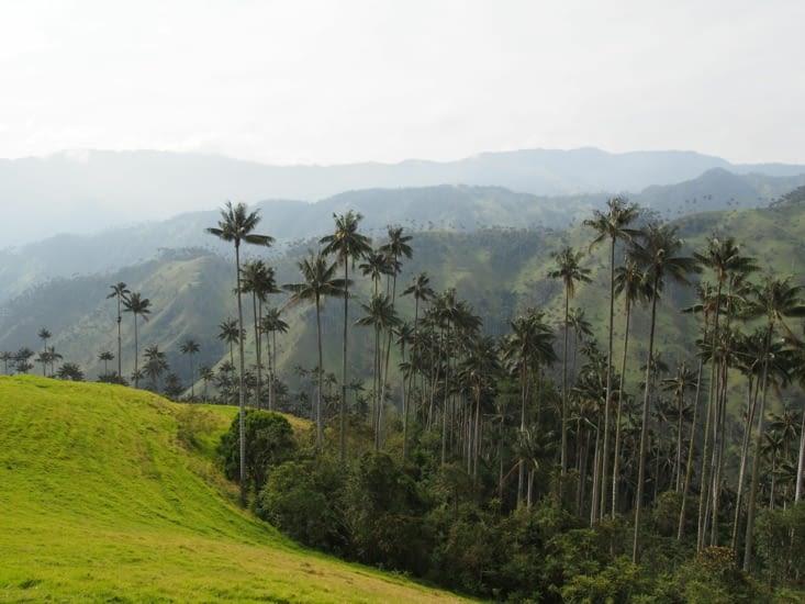 La vallee de palmier