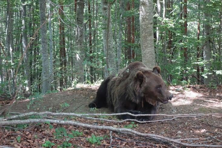 Un ours triste