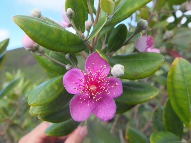 interlude jolie fleur (mais espèce invasive, c'est le mal!)