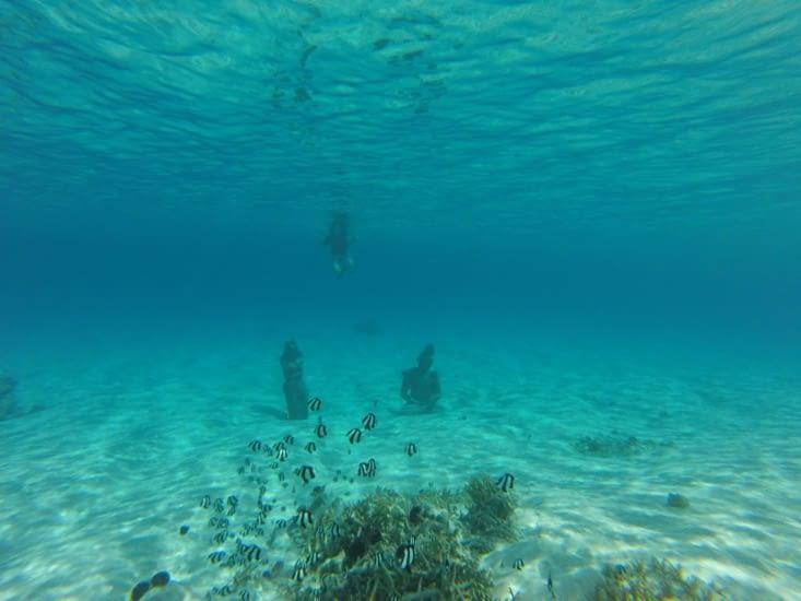 jardin zen sous marin