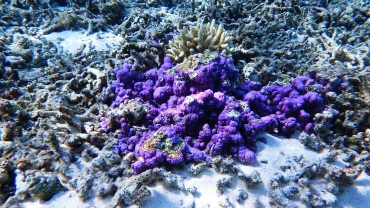 On découvre un beau jardin de corail