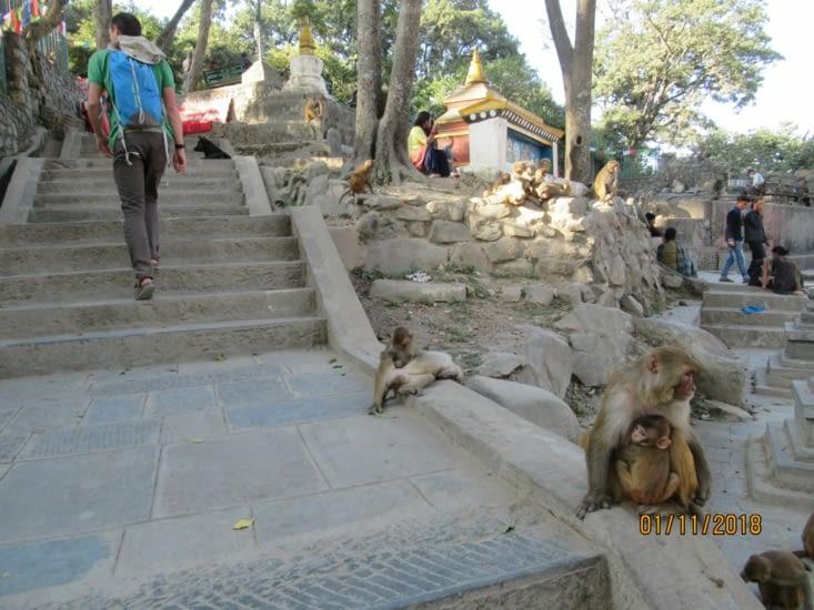 On arrive à Swayambunath, le royaume des singes
