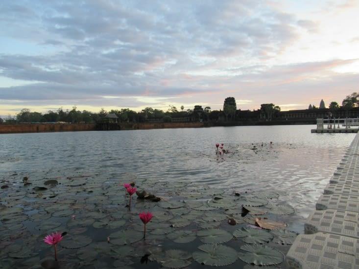Les nénuphars des douves d'Angkor Vat, là ou se trouvaient dans le passé les alligators!!!