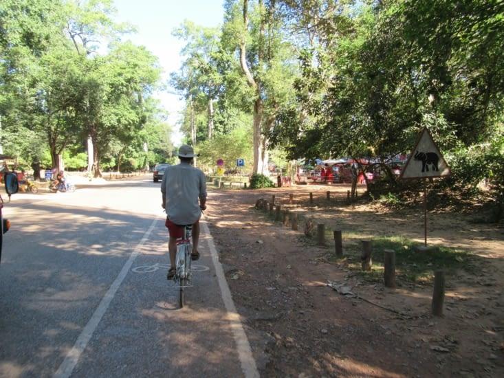 On poursuit en vélo ... mais attention aux éléphants !