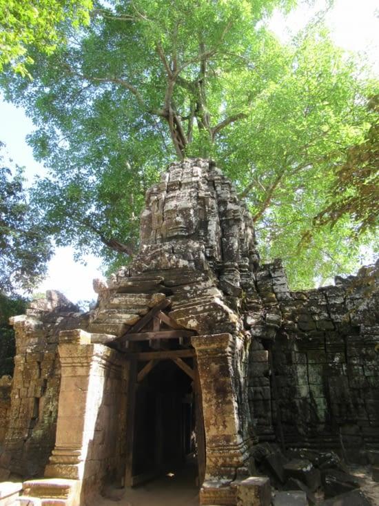 Prasat Ta Som - dont la porte est envahie par un grand arbre