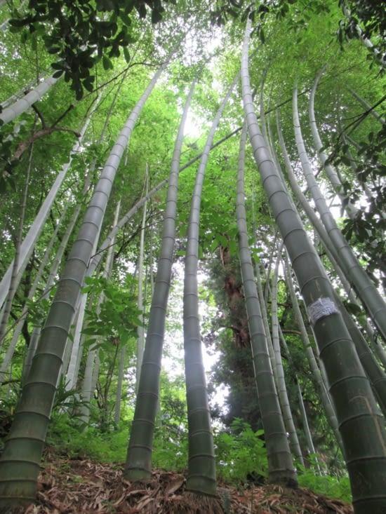 Jardin botanique - avec des bambou bien sûr
