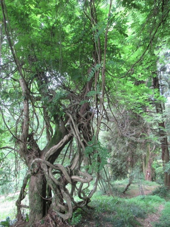 Jardin botanique - des arbres qui vous mettent sans dessus dessous