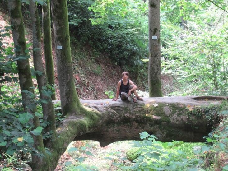 Jardin botanique - des arbres à vous donner envie d'y monter !
