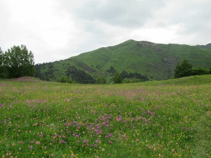 ... on adore ces prairies naturelles ...