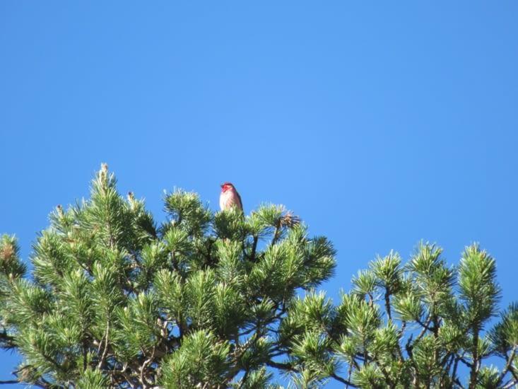 Observation des oiseaux depuis notre balcon