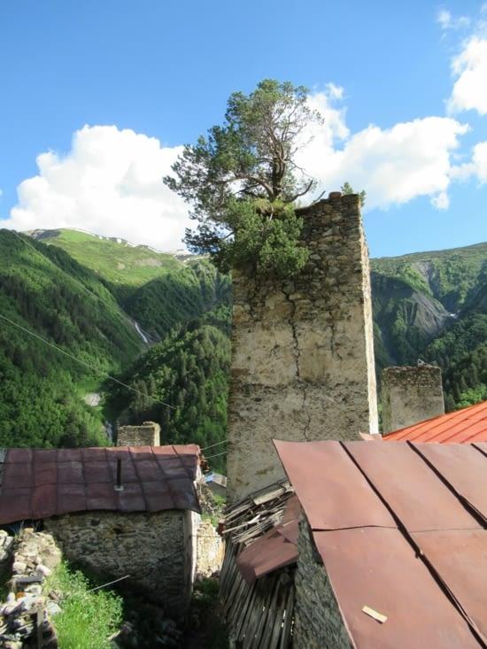 Tour de défense du village envahie par la faune et la flore