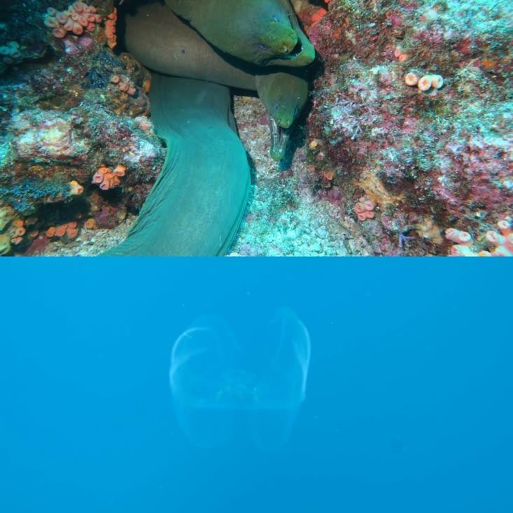 Murènes et méduse