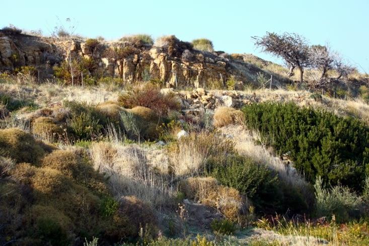 The arid farm land.