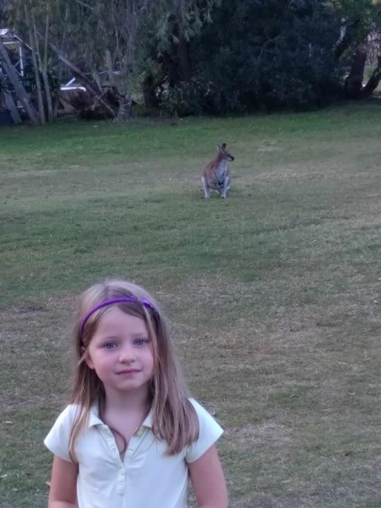 Surprise le soir au camping: visite d'un kangourou