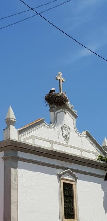 OLHAO, nids de cigognes sur les plus beaux monuments, elles ont du goût !