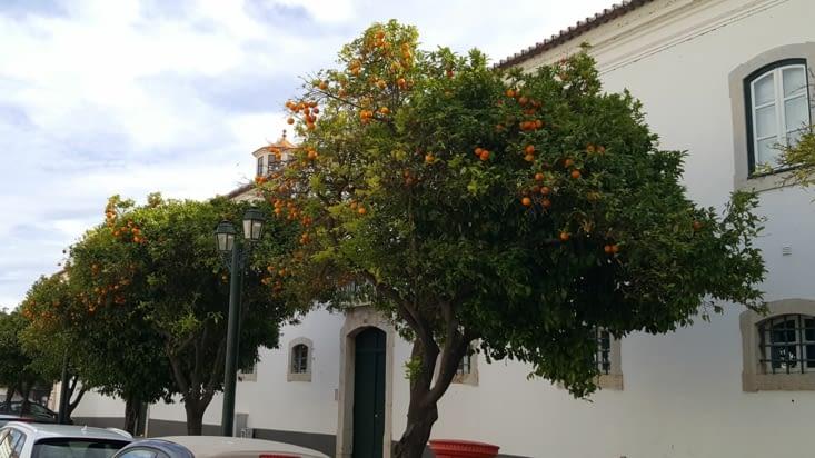 FARO Orangers
