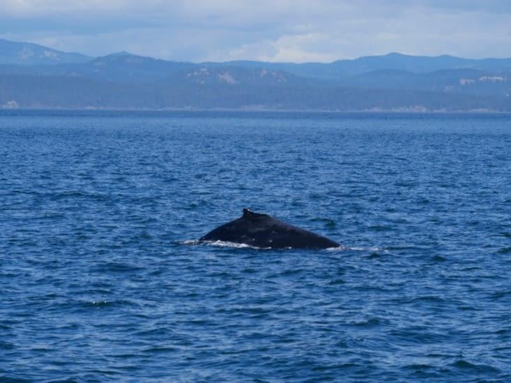 Peinarde la baleine