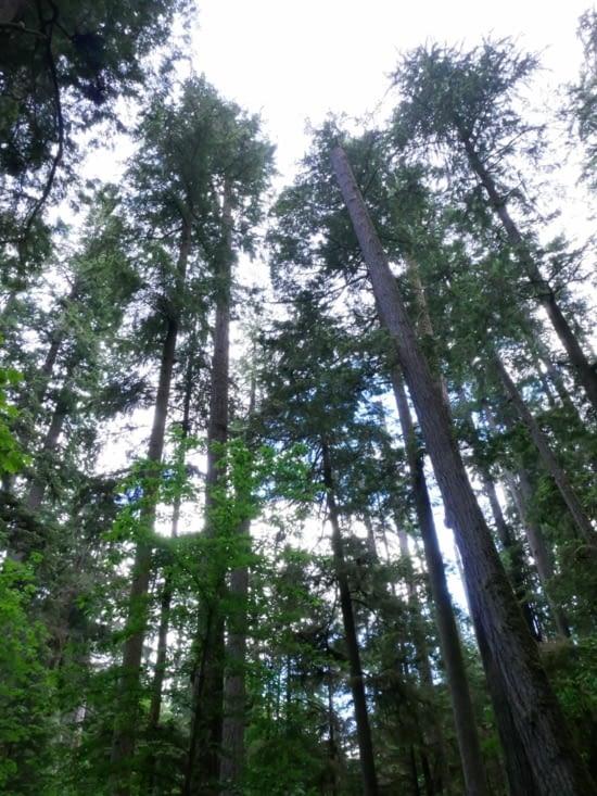 Cathédral grove