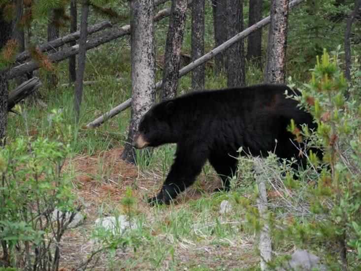 Un autre ours sur notre route
