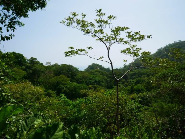Au beau milieu de la jungle