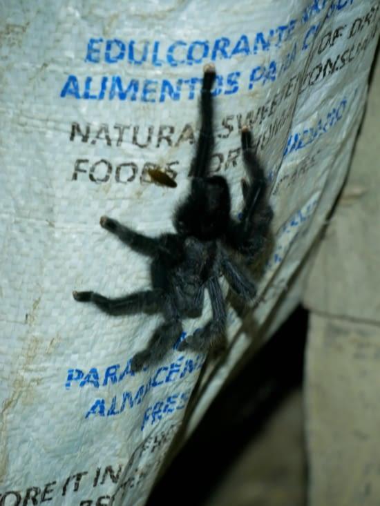 Araignée du soir, bonsoir !
