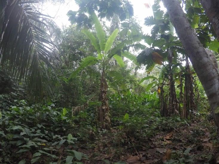En pleine jungle !