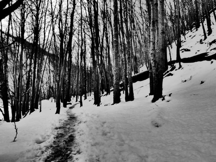 On s'engoufre dans la forêt