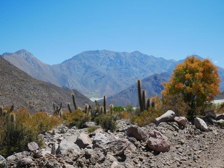 Aridité et cactus