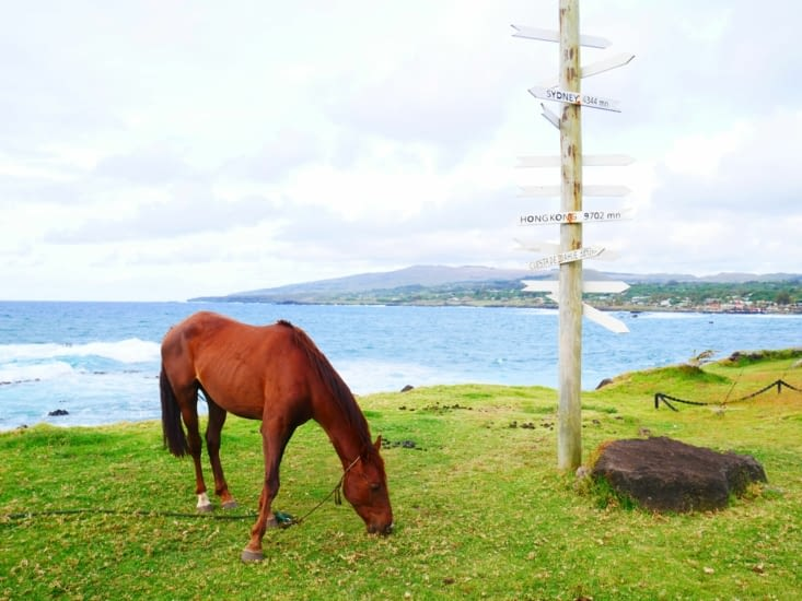 L'île aux chevaux