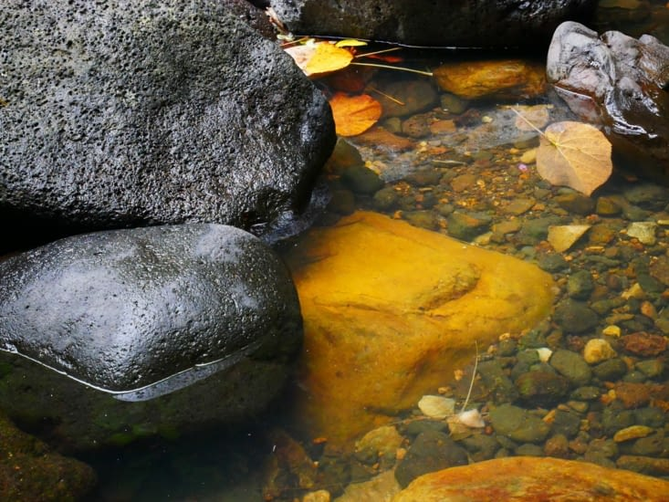 Il y a anguille sous roche