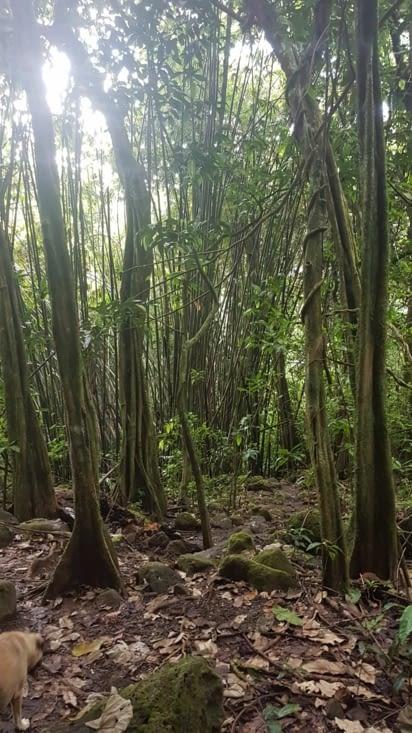 On s'enfonce dans la forêt