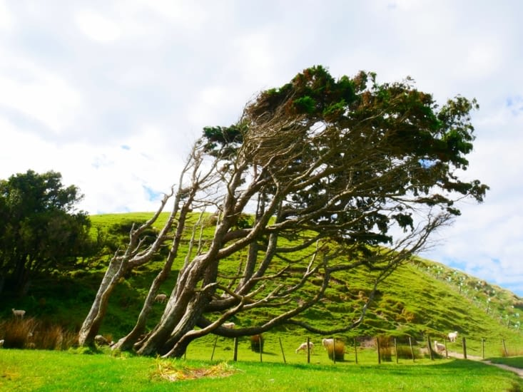 Arbre coiffé par le vent