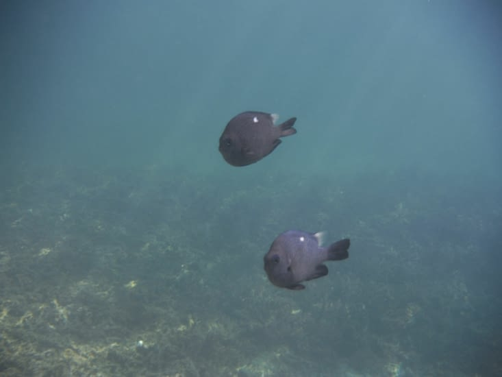 Baignade dans la baie de Kaa Nuë Méra