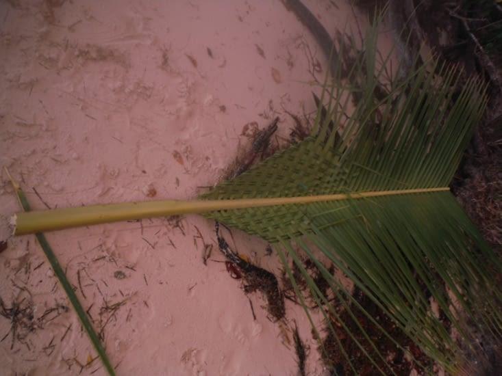 Tressage de feuille de palmiers