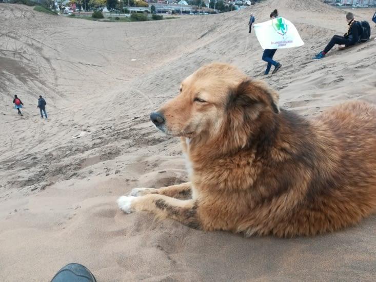 Ignace, le chien qui nous a accompagné.