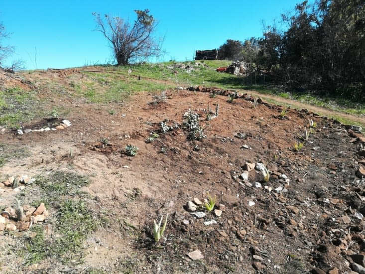 Quelques cactus et plantes grasses